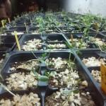 seedlings-basement