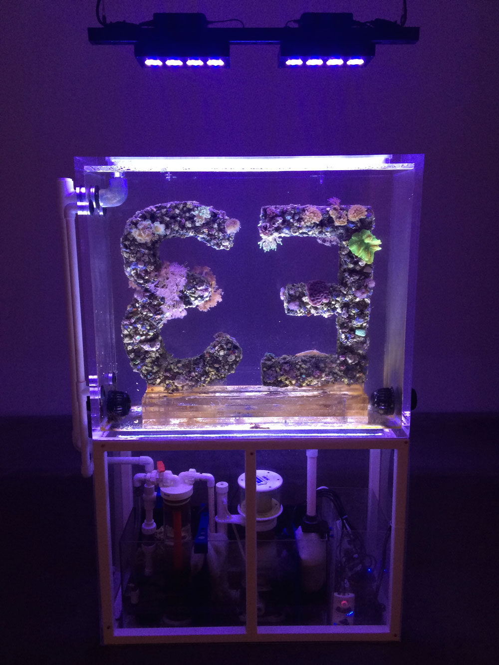 Another moment of interest in the Triennial was this sculpture by French-born artist Antoine Catala. It's an aquarium with live corral and was originally commissioned by Carnegie Museum of Art for a solo show Antoine did there. Totally weird but addictive.
