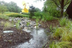 featured image - rain garden